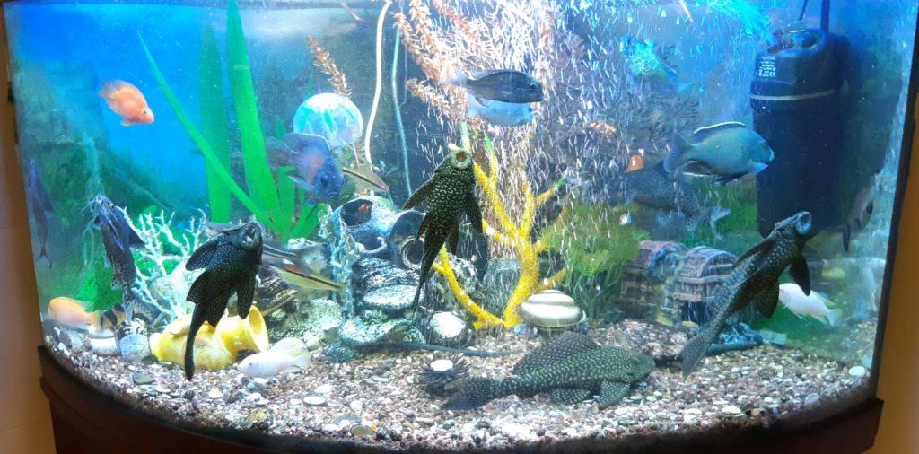 4. One of the aquariums, Bolshoi Ballet 2021 © Bolshoi Ballet
